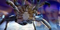 """Отзыв на фильм """"Атака пауков"""""""
