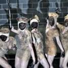 Косплей-хоррор: Silent Hill (13 ФОТО)