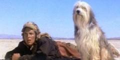 Пёс и его парень