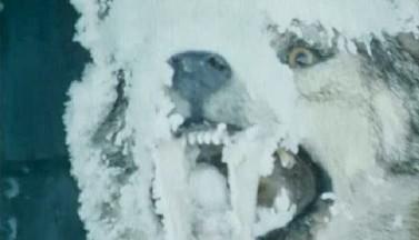 Убрать лишнего — отзыв на фантастический триллер «Турбаза волчья» (1986)