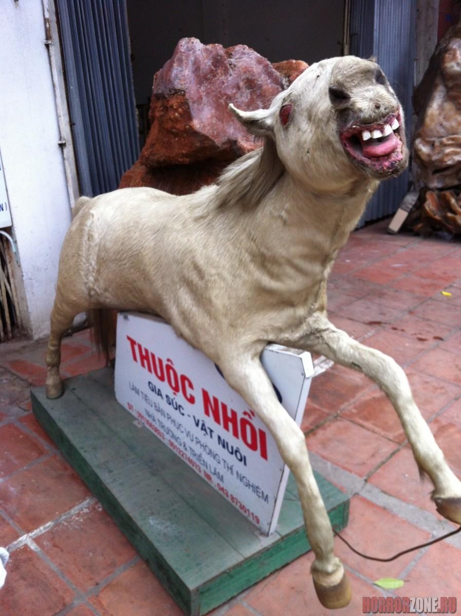 снимки, смешные чучела животных фото ландыш выдающиеся