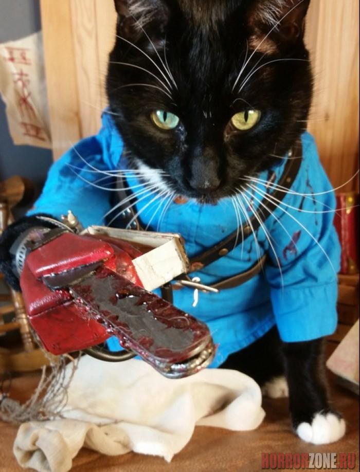 гифка с котом который ногти пилить товар сертифицирован отличается