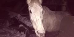 Белая лошадь пугает людей на дорогах Самары (ФОТО, ВИДЕО)