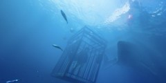 """Акулы на глубине 47 метров. Смотрим дублированный трейлер """"Синей бездны"""""""