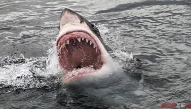 MARE TENEBRARUM: Киномонстры морских глубин