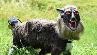 Жуткие волки-роботы охраняют японские фермы от нашествия кабанов (ФОТО, ВИДЕО)