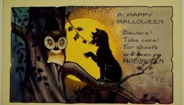 Кошка и сова на Хэллоуин