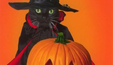Кошка. Тыква. Хэллоуин!