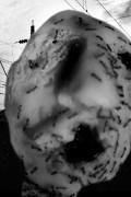 Муравьиная голова