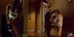 Во власти тигра. Рецензия