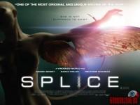 splice08.jpg