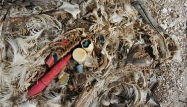 10 самых печальных фото мусорного острова в Тихом океане.