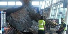 Гигантский орел из Хоббита рухнул прямо в аэропорту!))