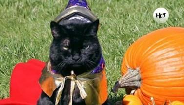 До Хэллоуина надо решить, какие фильмы посмотреть на НСТ и во что нарядить котиков
