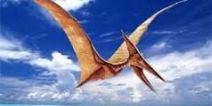 Глядя на птиц в далёком синем небе