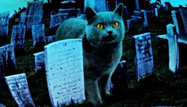 Кладбище домашних животных. Обои